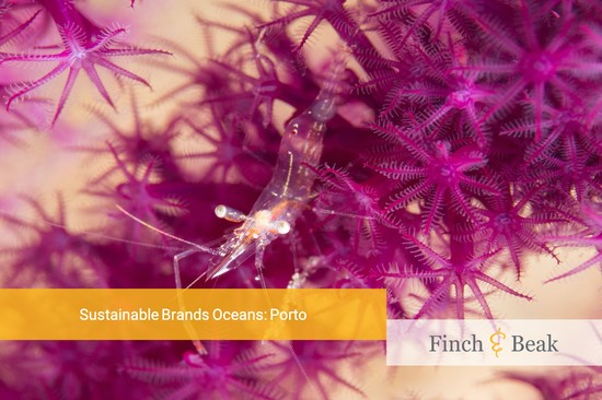 Sustainable Brands Oceans: Porto