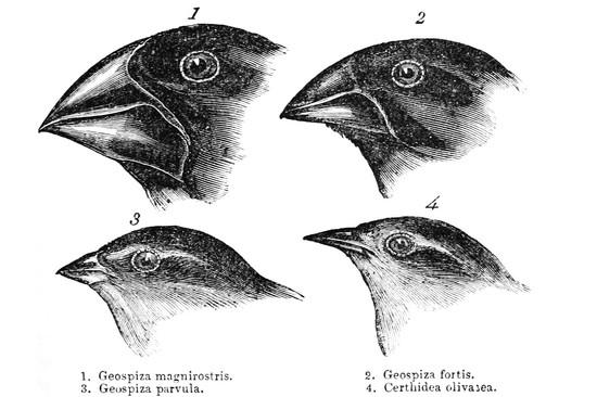 Finch & Beak