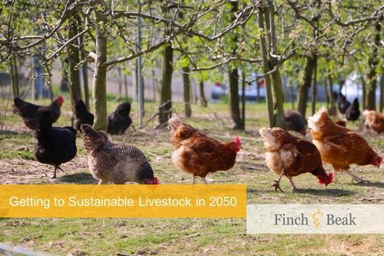Alternative Animal Proteins