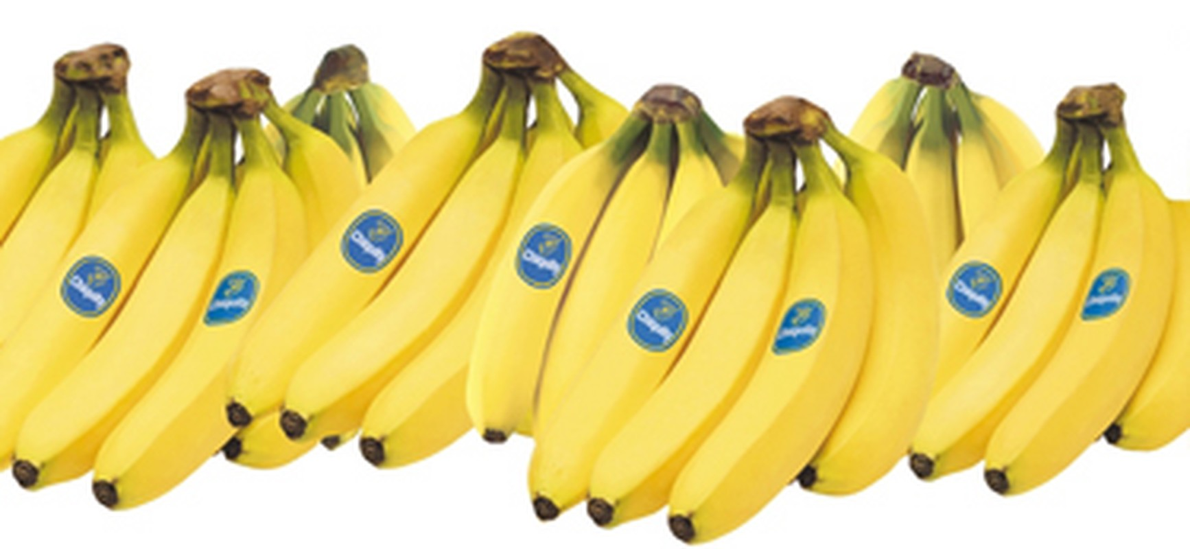 chiquita and the rainforest alliance case Better bananas: chiquita settles lawsuit over certified sustainable by the rainforest alliance in that case, the company agreed.